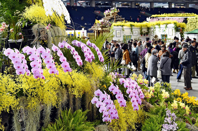 The Japan Grand Prix International Orchid Festival 2020, organized by The Yomiuri Shimbun, NHK and others, opened on Feb. 14, 2020 at Tokyo Dome in Bunkyo Ward, Tokyo. About 100,000 orchids of about 3,000 species from 18 countries and regions will be on display until Feb. 21. MUST CREDIT: Japan News-Yomiuri