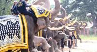 Ten elephants from the Royal Elephant Kraal Village in Ayutthaya, selected for their beautiful tusks, take part in a rehearsal for a parade at the Grand Palace on Tuesday in honour of HM King Bhumibol Adulyadej.