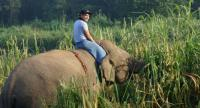 Riding an elephant bareback requires thick long pants to protect the legs from the hard elephant