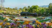 Chiang Rai welcomes visitors with cool weather and colourful flowers at the Chiang Rai Flower Festival and Music in the Park.