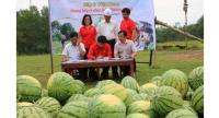 Representatives of Big C and Quang Ngai sign an agreement to buy watermelons from farmers in the province.