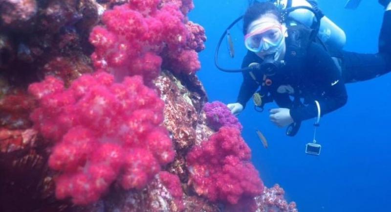 Photo Courtesy of the Marine National Park Thailand (www.facebook.com/marine.dnp/)