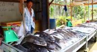 Fish seller in Kien Giang Province sells the fresh caught fish from Mekong River Delta and the surrounded sea.
