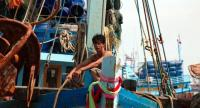 A fishery worker at Pattani port Aug.12, 2016; Daniel Murphy for Human Rights Watch.
