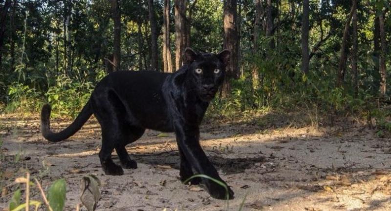 Photo credits: Sunshine Sketcher Facebook Page/ Wildlife Photographer Parinya Padungtin