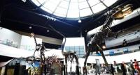 Sirindhorn Museum is the place to see the wonderful array of dinosaur fossils that have been unearthed in Thailand since the first bones were found 1978.