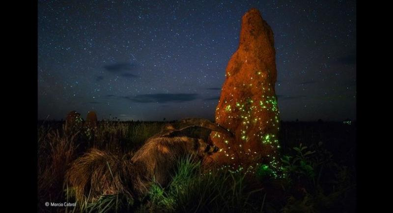 The night raider by Marcio Cabral//Wildlife History Museum