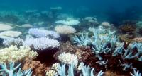 An undated handout photo received from ARC Centre of Excellence for Coral Reef Studies on April 19, 2018 shows a mass bleaching event of coral on Australia's Great Barrier Reef. Photo/AFP