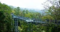 The Canopy Walks is the latest addition to the botanical garden offering a bird's eye view from the treetops.
