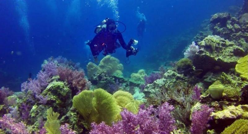 Most of the coral species affected are Porites Coral.