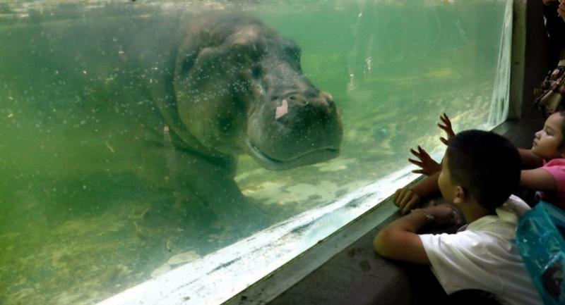 File photo: Dusit Zoo