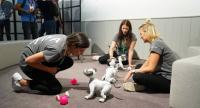 Staff members play with Sony Aibo robot dog at Sony booth at the International Consumer Electronics Fair, the world's leading consumer electronics and home appliances exhibition, in Berlin on Aug 30, 2018. [Photo/VCG]