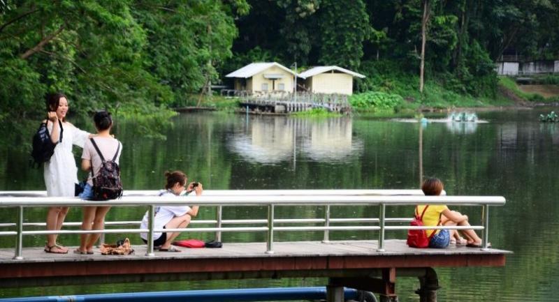 Chinese tourists enjoy taking photos at Ang Kaew reservoir, a tourist attraction at Chiang Mai University. /Photo By Parinya Chawsamun