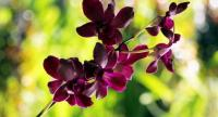 A total of 160 orchid species have been discovered in Bengkulu through search expeditions conducted since 2012. (Shutterstock/File)