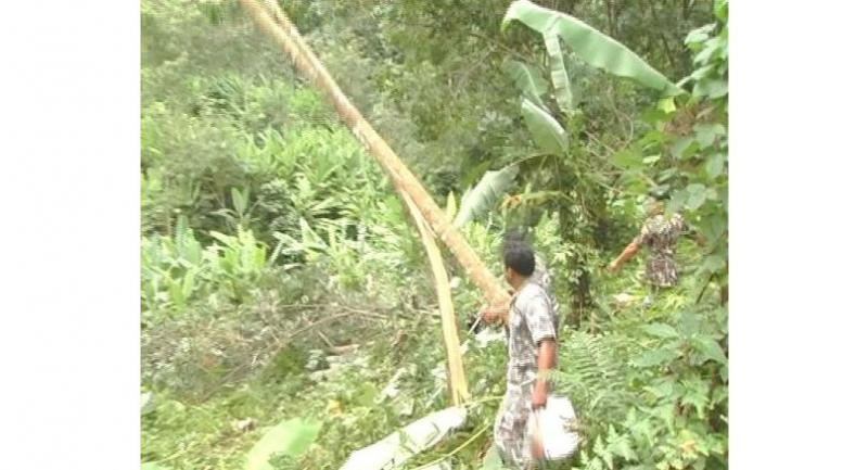 Officials cut down 1,500 encroaching rubber trees in Nakhon
