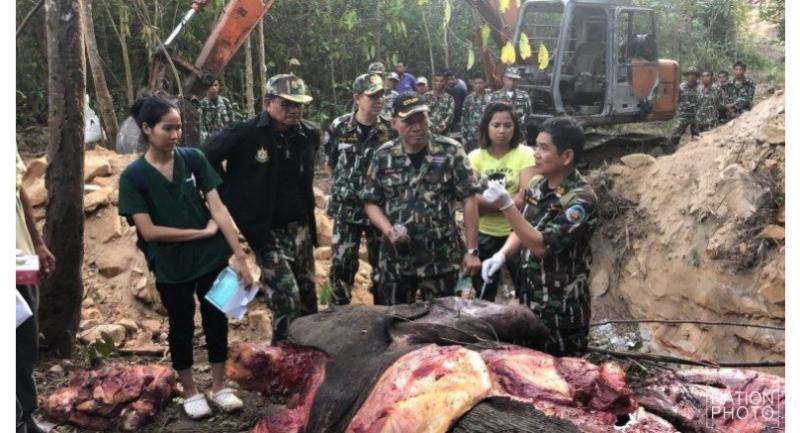 Chaiwat inspected a dead elephant in Buntrik-Yodmon wildlife sanctuary in mid November.