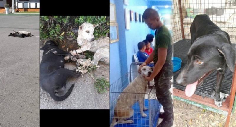 Photo from: Watchdog Thailand
