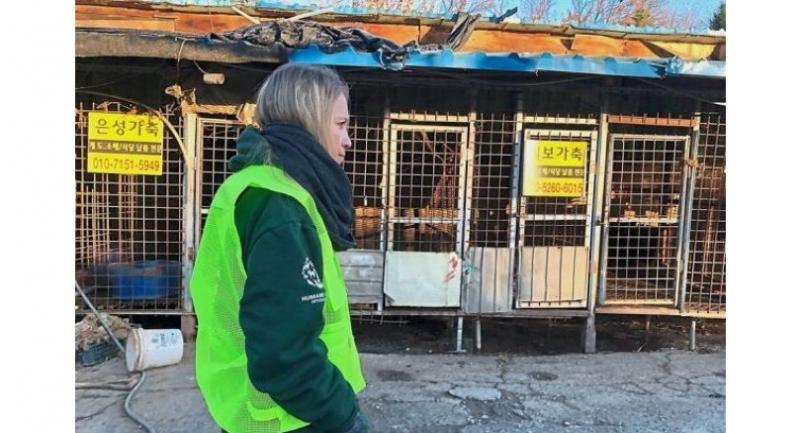 Stark picture: A member of the US-based Humane Society looking at empty cages at the Taepyeong-dong dog slaughterhouse in Seongnam city, which was closed down, in this file picture.