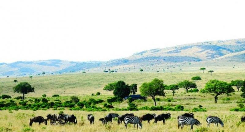 """The Masai Mara Reserve is the best spot to experience the annual """"Great Wildebeest Migration"""" between Tanzania and Kenya."""