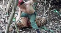 Vietnamese poachers recorded their kills of wild tigers in Thailand.