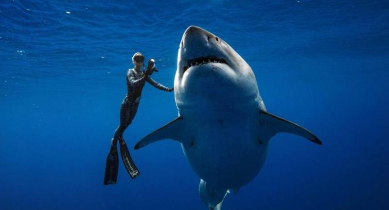 File photo : Diver Ocean Ramsey (@oceanramsey) swims next to a female great white shark off the coast of Oahu, Hawaii on January 15, 2019.//AFP