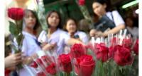 As a red rose remains the popular Valentine's Day gift but the price is pushed higher due to a big demand, many people especially youths are shopping for single roses rather than bouquets.