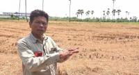 Farmers in Pathum Thani province