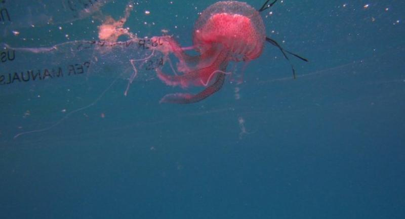 Plastic floats along with marine animals in the seas and lands ashore. Photos courtesy of WWF.