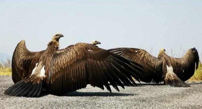 Photo Courtesy of the Wildlife Conservation Bureau (Facebook.com/DNP.Wildlife/)