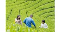 Organic farming and hand-picking of tea leaves are becoming popular activities in agro-tourism.