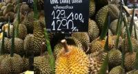 Long  Laplae durians