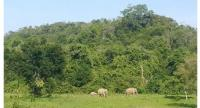 The opportunity to see elephants and gaurs in the wild attracts tourists to Kui Buri National Park.