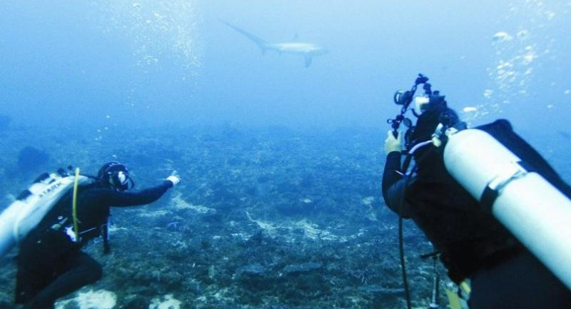 Monad Shoal is a world-famous dive site where scuba enthusiasts to get up close and cosy with thresher sharks.