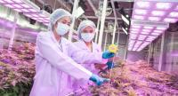 GPO specialists inspect a cannabis plant in its closed-system farm.