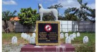 A statue stands in the middle of a graveyard dedicated to the memory of mine detection dogs.//Photo supplied