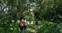 Sivaporn Iamjitkusol, far right, leads visitors to learn about her organic farming based on integrated and sustainable agricultural system in Klong Plu subdistrict of Chanthaburi.