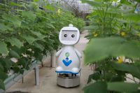 A farming robot moves in between two rows of plants in a greenhouse in Fuzhou, capital of Fujian province. [Photo provided to China Daily]