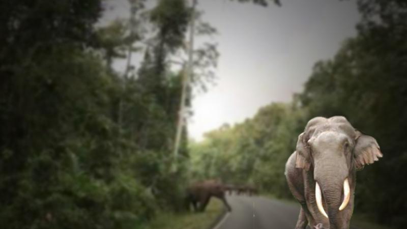 泰国考艾国家公园警告游客不要惊吓野生大象