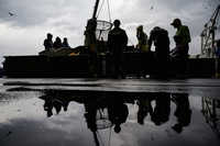 Fishermen sort salmon as they unload the Hokushin Maru.  Photo: Salwan Georges for The Washington Post