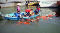 Workers collect ocean plastic waste in Quy Nhơn Port, coastal south-central province of Quy Nhơn.—VNA/VNS Photo