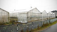 A greenhouse of a green onion farmer in Asahi, Chiba Prefecture, where Thais and others were working illegally, seen in December. (Photo: The Yomiuri Shimbun)