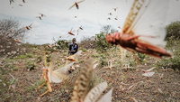 A youngster runs making noise in order to scare away from their homestead a swarm of desert locust, in the zone of Borena, Ethiopia, on February 1. Photo by Eduardo Soteras Jalil for The Washington Post.