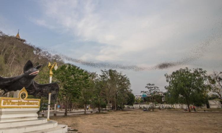 The Khao Chong Phran bat cave /File Photo credit:เที่ยวราชบุรี.com