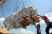The country could export 800,000 tonnes of rice in April and May. — Photo bnews.vn