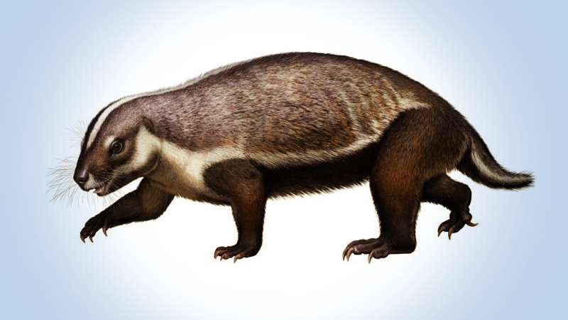 This life-like reconstruction of Adalatherium hui from the late Cretaceous of Madagascar shows off the creature's weird-looking body and plentiful whiskers. (Image: © Denver Museum of Nature & Science/Andrey Atuchin)