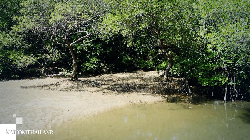 Thailand mangrove loss