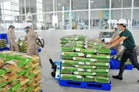 In July, Vinaseed – a member of The PAN Group, exported VJ Pearl Rice and RVT fragrant rice to the Netherlands and the Czech Republic. — Photo courtesy of Vinaseed