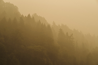 Smoke blankets the tree line Sunday in Troutdale, Ore., east of Portland. MUST CREDIT: Photo by Mason Trinca for The Washington Post.