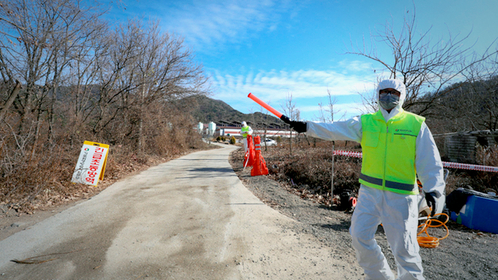 A quarantine official bans the entry of automobiles into a farm in Sangju, 270 km southeast of Seoul, after it reported a highly pathogenic avian influenza case from chickens. (Yonhap)