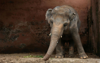 Kaavan has spent nearly a decade alone. (Photo: Reuters)